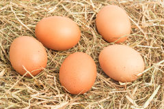 Five eggs nestled in straw Stock Photos