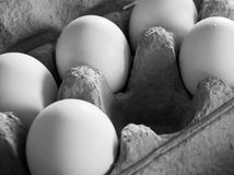Five eggs in soft, dim light. In a grey carton, arranged as to imply that a central egg has been removed and positioned diagonally across frame. Greyscale image Royalty Free Stock Photos