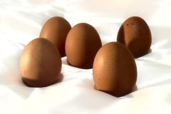 Five eggs with a white background Royalty Free Stock Photography