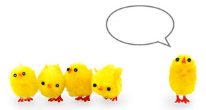Five fake chickens with caption bubble. Five fake easter chickens with a caption bubble above the right one for some text stock photo