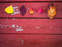 Five fall leaves on wood Stock Photos