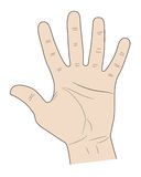 Five fingers of a hand. Sign five fingers a palm up on white background Stock Photography