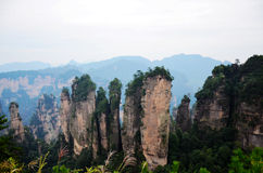 Five fingers peaks in Wulingyuan Scenic Area. Five peaks together, like the five fingers so called five fingers peaks Royalty Free Stock Photos