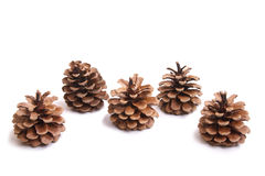 Five fir cones Stock Photo