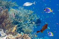 Five fishes and Underwater landscape Stock Image