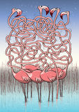 Five Flamingos Maze Game Royalty Free Stock Images