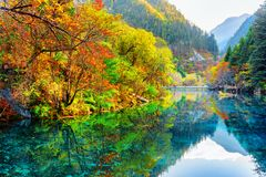 The Five Flower Lake. Autumn forest reflected in water. Amazing view of the Five Flower Lake Multicolored Lake among colorful fall woods and mountains in stock photo