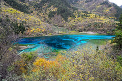 Five flower lake, Jiuzhaigou. Aerial view of Five flower lake in Juizhai valley, Sichuan, China Royalty Free Stock Image