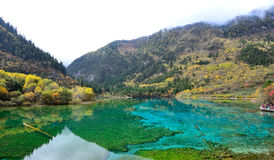 Five flower lake, Jiuzhaigou. Five flower lake or Five colored lake in Jiuzhaigou national park, Sichuan, China Royalty Free Stock Images