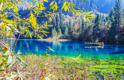 Five Flower Lake,Jiuzhaigou,north of Sichuan province, China. Stock Photos