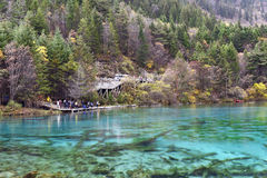 Five Flower Lake, Jiuzhaigou Valley Royalty Free Stock Photography