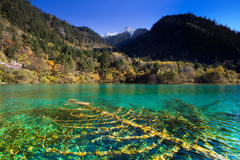 Five Flower Lake is lake in Jiuzhaigou Royalty Free Stock Images