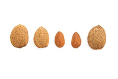 Five fresh almonds Stock Images