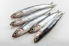 Five fresh anchovies  on white background. Five fresh whole anchovies  on white background Royalty Free Stock Photography