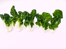 Five fresh baby bok choy isolated on white Royalty Free Stock Images