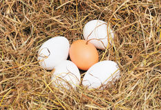 Five fresh eggs Royalty Free Stock Images
