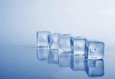 Five fresh ice cubes studio shot blue toning Royalty Free Stock Images