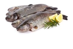 Five fresh rainbow trout on white background.  Stock Photography