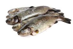 Five fresh rainbow trout on white background Royalty Free Stock Photo