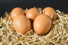 Five fresh raw eggs with freckles on the hay on black background stock images
