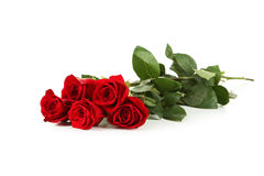 Five fresh red roses on white Royalty Free Stock Photos