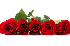 Five fresh red roses on the white background Royalty Free Stock Images