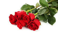 Five fresh red roses on white background, close up Stock Images