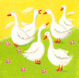 Five funny geese Royalty Free Stock Photos