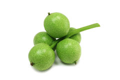 Five fused unripe walnuts Royalty Free Stock Photography