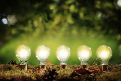 Five glowing eco friendly efficient light bulbs. Standing in a row in moss over a green outdoors background with copy space above in an environmental concept royalty free stock photos