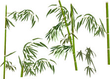 Five green bamboo branches collection on white Stock Photography