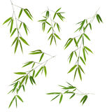 Five green bamboo branches isolated on white Royalty Free Stock Images