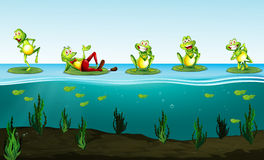 Five green frogs in the pond Stock Photos