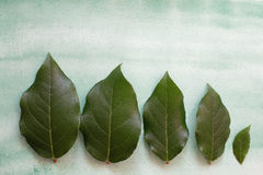 Five green leaves Stock Photos