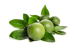 Five green limes with leaves Royalty Free Stock Photos
