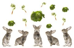 Five grey  rabbit Stock Photos