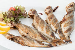 Five grilled fish on plate Stock Images