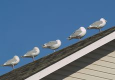 Five gulls Royalty Free Stock Photography