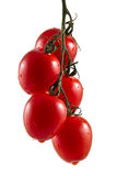 Five hanging truss tomatoes Stock Photography