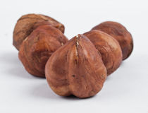 Five hazel nuts Royalty Free Stock Photography