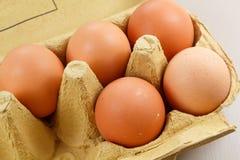 Eggs in an egg carton. Five hen eggs in a beige egg carton royalty free stock photography