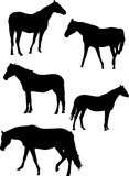 Five Horse Silhouettes Royalty Free Stock Photos