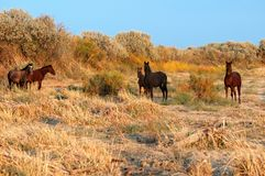 Five horses Stock Photography