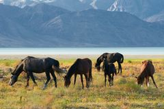 Five horses Royalty Free Stock Image