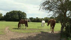 Five Horses In Field