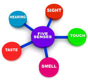 Five human senses. Five senses of human beings, sight touch hearing taste and smell Stock Images
