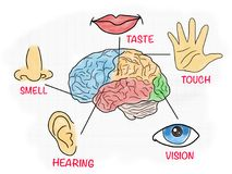 Five human senses educational poster stock illustration