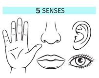 Five human senses. Vector icons. Outline illustration of lip, ear, nose, eye and hand stock illustration