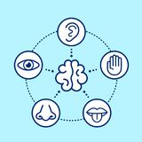 Five human senses surrounding brain. Vision, hearing, smell, touch, taste.Vector flat line illustration icon design.Human nose, eye, hand, ear, mouth senses vector illustration