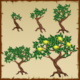 Five icons growth stages of lemon tree in the Stock Photography